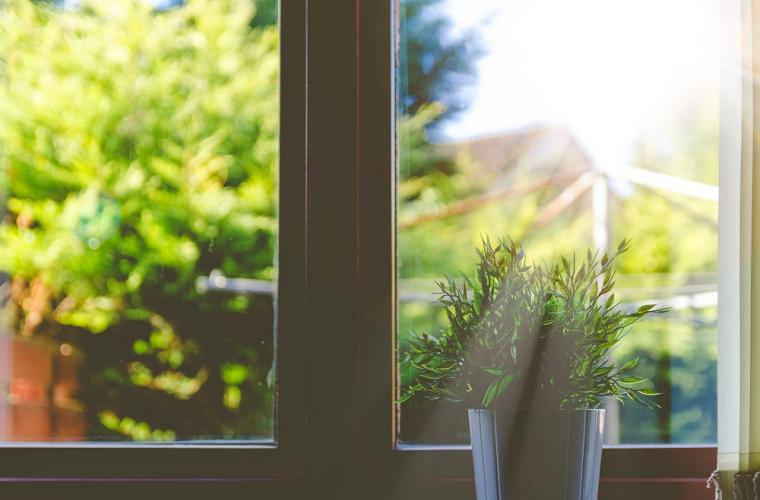 View of a back garden through a window on a sunny day