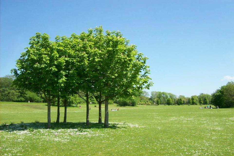 Coronavirus: LGA responds to Communities Secretary praise for councils on keeping parks and green spaces open